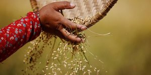Céréales, blé, orge, agriculture