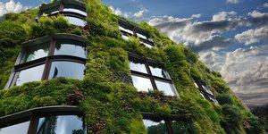 Illustration mur végétal écologie
