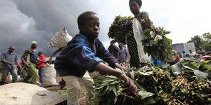 Manioc, virus, Ebola, sEcuritE alimentaire, Afrique,